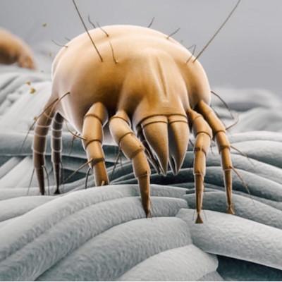 Чего боятся пылевые клещи?